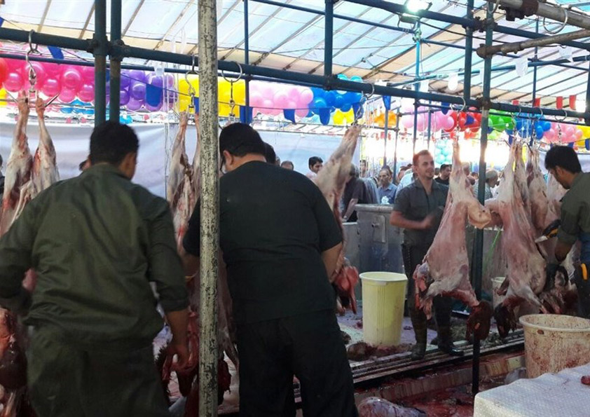 Slaughtering more than 500 sheep as immolation on the eve of Ghorban celebratio